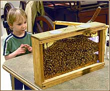 bee hive display